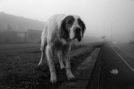 Hunde sind auch nur Menschen