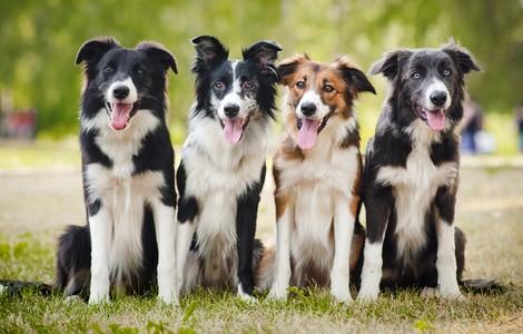 Neue Forschung zur Herkunft des Hundes
