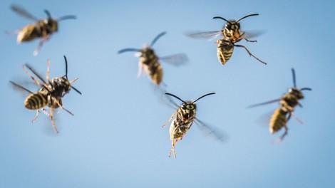 Beruhigend: Auch Ameisen und Bienen sind stinkfaul