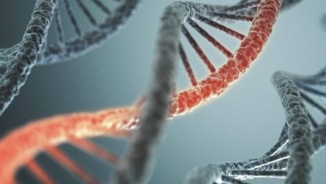 Erweiterte DNA Analyse