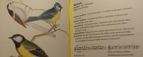 Mehr Verben am Morgen! Handwörterbuch der Vogellaute