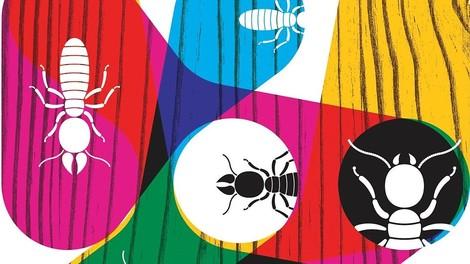 Ausgerechnet Termiten könnten uns zeigen, wie wir unsere Städte schlauer organisieren