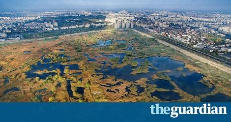 Văcărești: Wenn Natur über Stadtplanung siegt