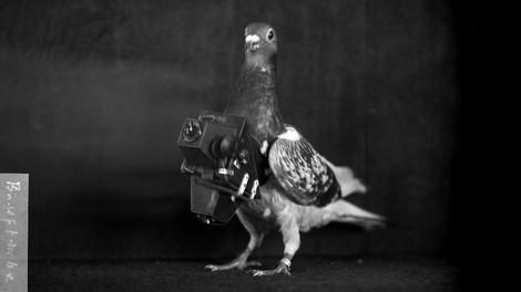 Vor den Drohnen, die Tauben. Ein Fotoartikel.