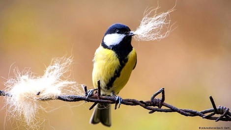 Was wird aus dem Basstölpel? Wenn Vögel nicht mehr ziehen – und kalt erwischt werden