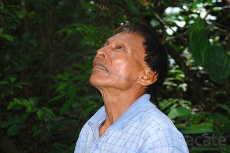 Amazonas-Heiler schreiben 1000-seitige Enzyklopädie ihres Wissens