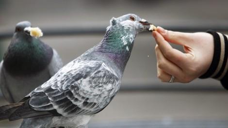Über Tauben, Torten und andere Girls, passend zum Regenwetter!