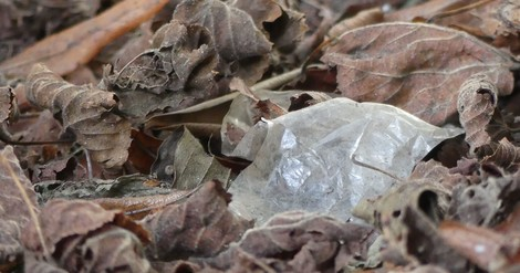 Wie Mikroplastik unsere Böden verändert