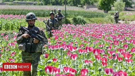 Die US Air Force bombardiert Schlafmohnfelder, die afghanische Heroinproduktion boomt trotzdem