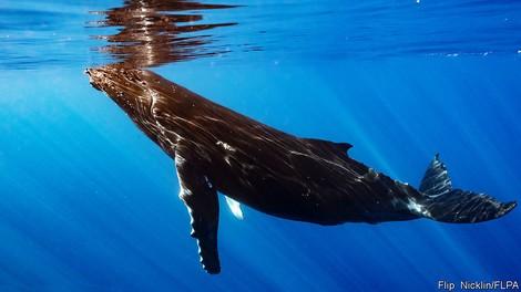 Elefanten, Wale, Dinosaurier – warum Forscher in den Riesen nach einer Krebskur fahnden