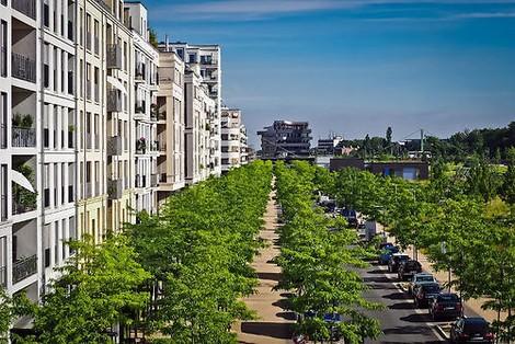 Klimabäume: Auenbäume für die Städte der Zukunft.