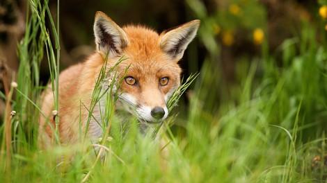 Seit 1970 haben sich die Bestände zahlreicher Waldtiere halbiert