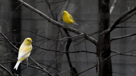 Ein Philosoph über Liebe, Freiheit und die Frage, ob beide einander ausschließen.