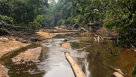 S.O.S. Amazonas - Apokalypse im Regenwald