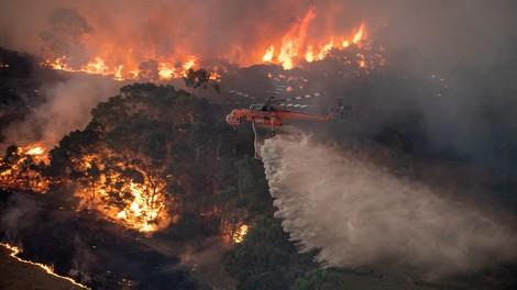Waldbrände in Australien: Wieso Kultur und Kapitalismus zusammengehören