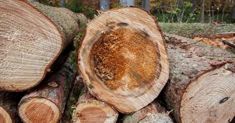 Wald: Mehr Natur wagen