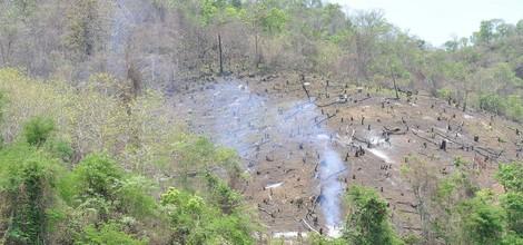 Wie EU-Importe Brasilianischen Sojas Entwaldung und Emissionen steigern