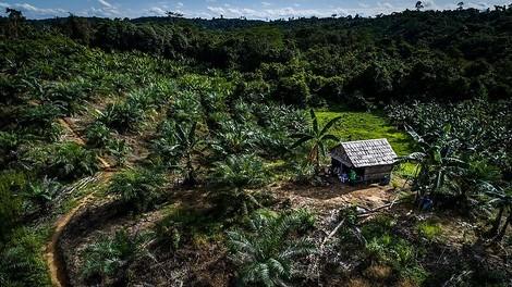 Fool me once ... - Indonesien streicht Geld für Waldschutz ein