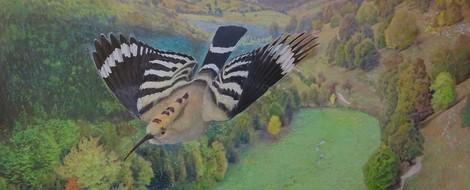 Mein kleiner Buchladen – Ornithologie: Federkleid & Flügelschlag