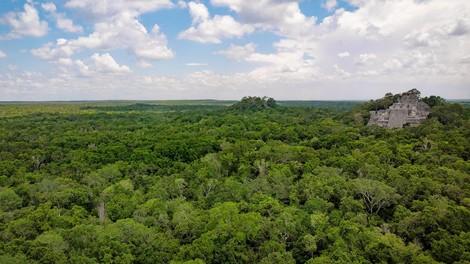 Der Märchenwald von Yucatan. Wo sind sie - die gespendeten Bäume?