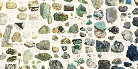 Steine für die Ewigkeit – James Sowerbys Illustrationen