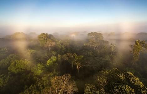 Der Amazonas kippt