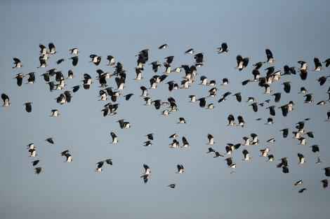 Was hat das Volksbegehren Artenvielfalt in Niedersachsen gebracht?